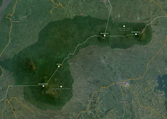The Virunga mountain gorillas of Volcanoes National Park are threatened by human presences because of the violence that occurs and because of the extremely high number of people surrounding the park that use the land for agriculture.